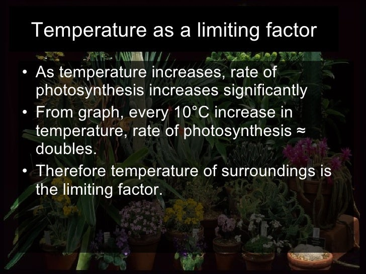 <ul><li>As temperature increases, rate of photosynthesis increases significantly </li></ul><ul><li>From graph, every 10°C ...