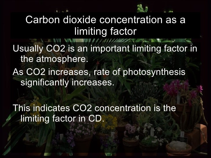Carbon dioxide concentration as a limiting factor <ul><li>Usually CO2 is an important limiting factor in the atmosphere.  ...