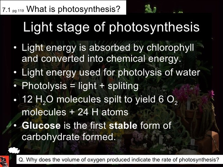 Light stage of photosynthesis <ul><li>Light energy is absorbed by chlorophyll and converted into chemical energy. </li></u...