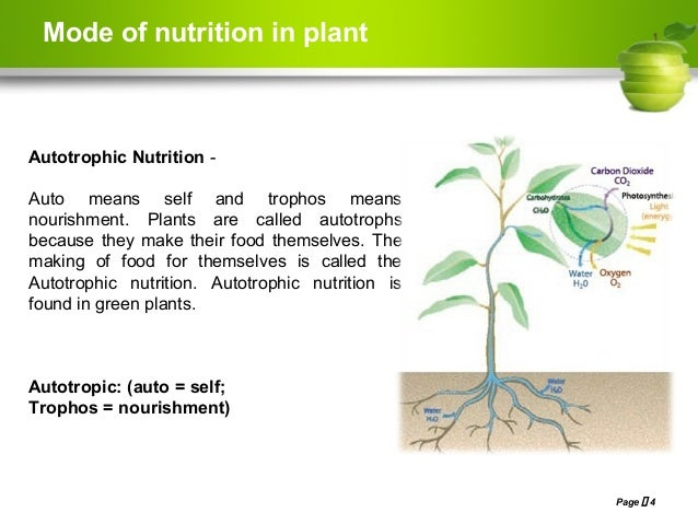 nutrition is nourishment or energy that A food or other substance that provides energy or building material for the survival and growth of a living organism a chemical substance that provides nourishment and affects the nutritive and metabolic processes of acids & nutrients in animal nutrition market by type (amino acids.