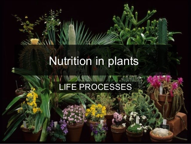 Nutrition in plants LIFE PROCESSES