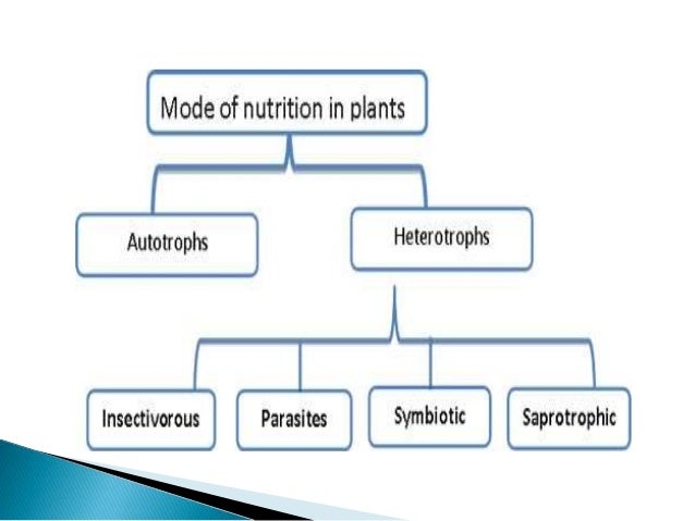essay autotrophic mode nutrition All heterotrophs depend on autotrophs for their nutrition heterotrophic plants have only four types the four main types of heterotrophic nutrition are:.
