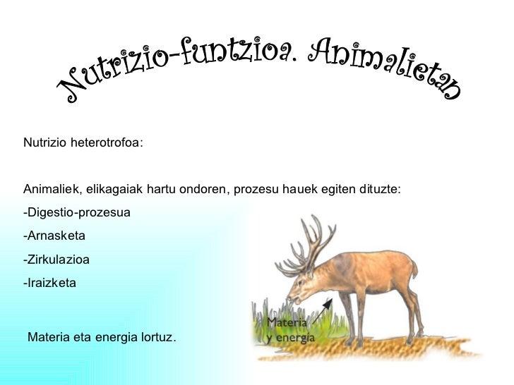 Nutrizio-funtzioa. Animalietan Nutrizio heterotrofoa: Animaliek, elikagaiak hartu ondoren, prozesu hauek egiten dituzte: -...