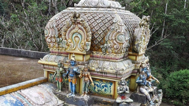"Saraca asoca (the Ashoka tree;""sorrow-less"") sacred tree in Hinduism"