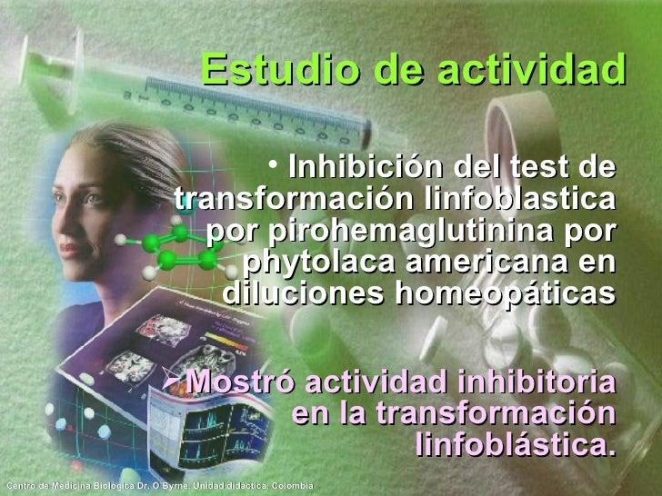 Estudio de actividad <ul><li>Inhibición del test de transformación linfoblastica por pirohemaglutinina por phytolaca ameri...