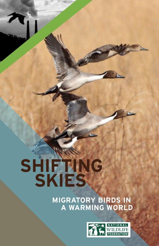 1Shifting SkiesSHIFTINGSKIESMIGRATORY BIRDS INA WARMING WORLD