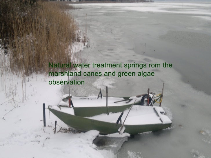 Natural water treatment springs rom themarshland canes and green algaeobservation