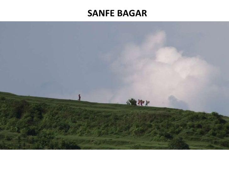 SANFE BAGAR <br />