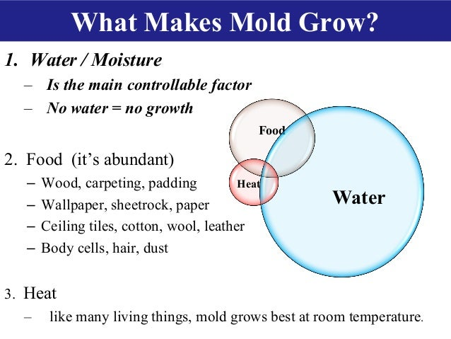 What Makes Mold Grow On Food