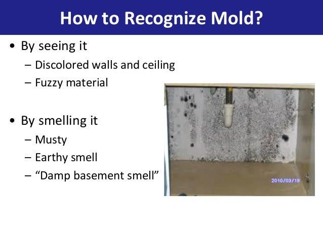 NYCHA Mold Awareness Presentation