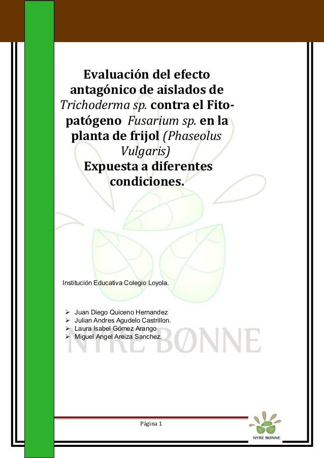 Evaluación del efecto antagónico de aislados de Trichoderma sp. contra el Fito- patógeno Fusarium sp. en la planta de frij...