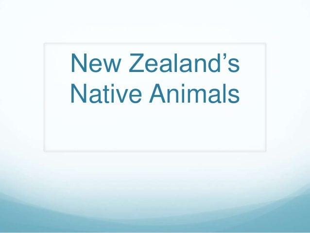 New Zealand's Native Animals