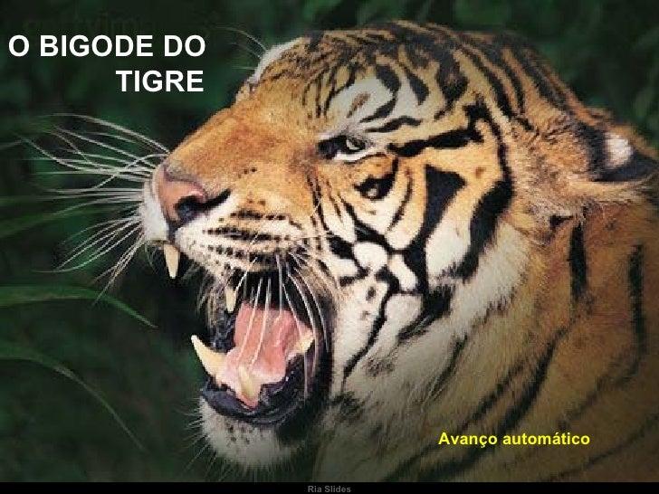 Ria Slides O BIGODE DO  TIGRE Avanço automático