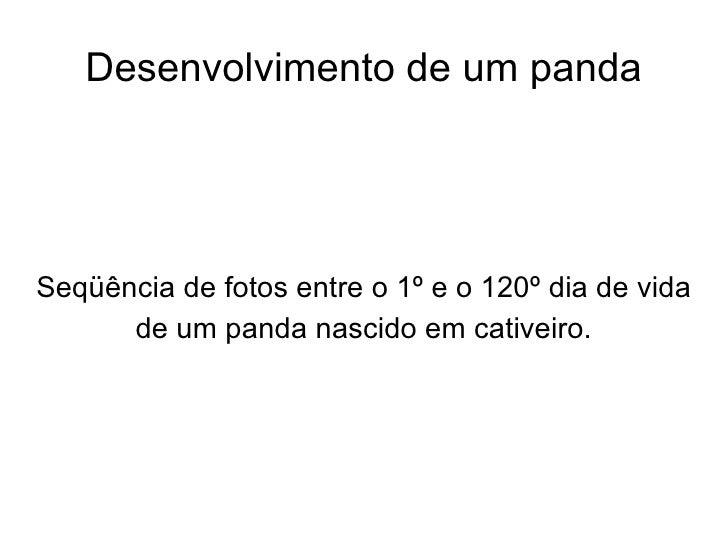 Desenvolvimento de um panda Seqüência de fotos entre o 1º e o 120º dia de vida de um panda nascido em cativeiro.