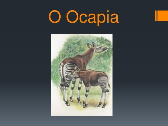 O Ocapia