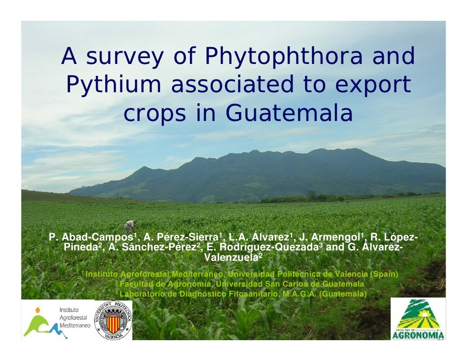 A survey of Phytophthora and   Pythium associated to export        crops in Guatemala     P. Abad-Campos1, A. Pérez-Sierra...