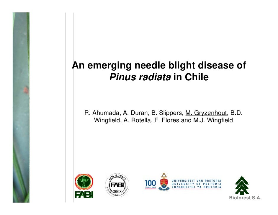 An emerging needle blight disease of       Pinus radiata in Chile     R. Ahumada, A. Duran, B. Slippers, M. Gryzenhout, B....