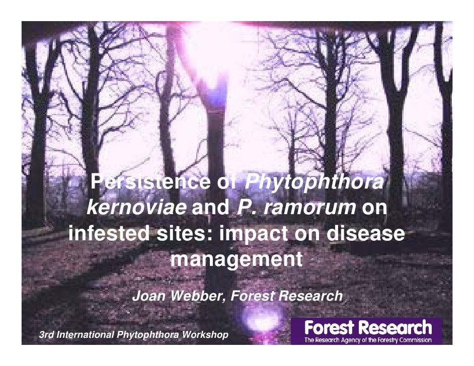Persistence of Phytophthora         kernoviae and P. ramorum on       infested sites: impact on disease                 ma...