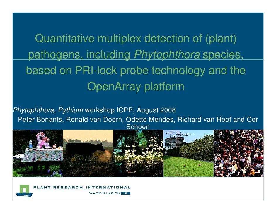 Quantitative multiplex detection of (plant)     pathogens, including Phytophthora species,     based on PRI-lock probe tec...