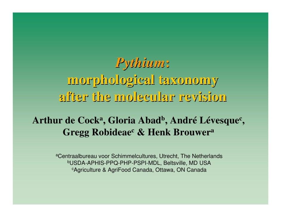 Pythium:        morphological taxonomy       after the molecular revision Arthur de Cocka, Gloria Abadb, André Lévesquec, ...