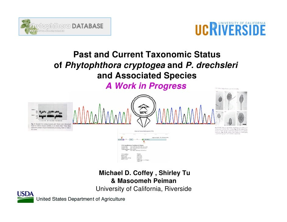 Past and Current Taxonomic Status of Phytophthora cryptogea and P. drechsleri            and Associated Species           ...