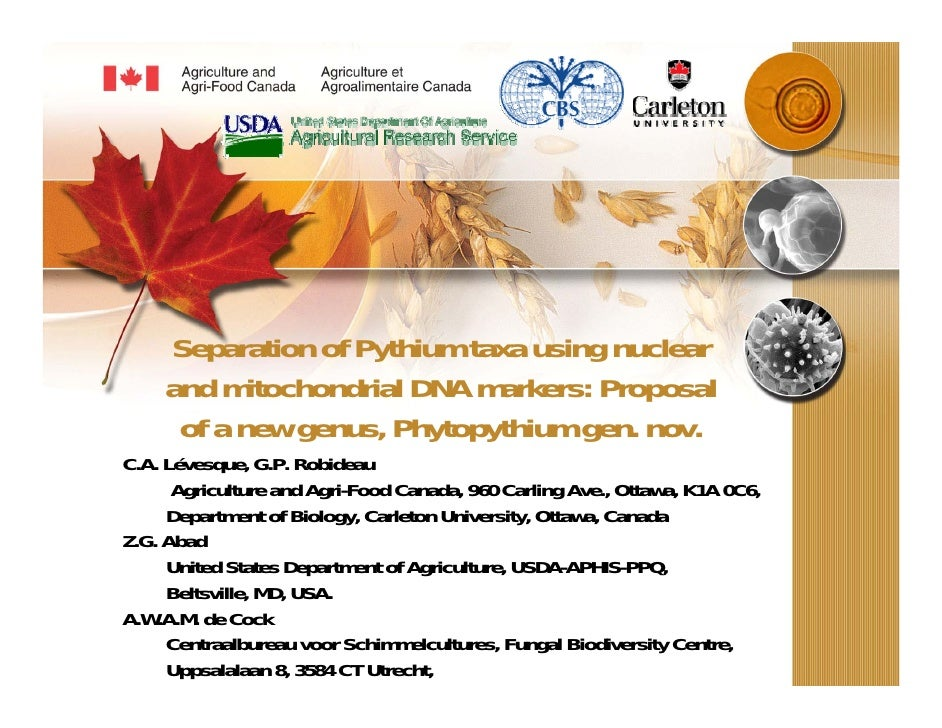Separation of Pythium taxa using nuclear     and mitochondrial DNA markers: Proposal      of a new genus, Phytopythium gen...