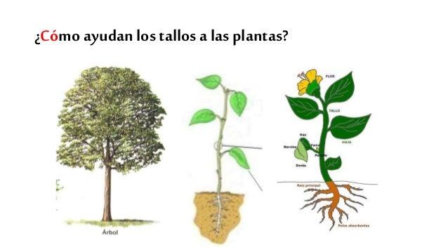 Oa 1 las plantas tipos de raices - Tipos de plantas ...