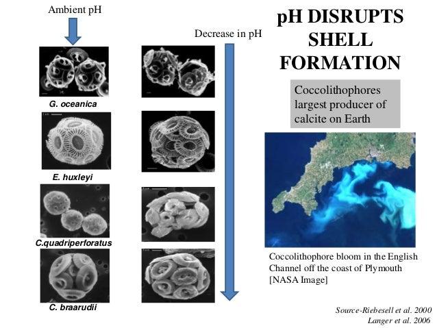Ocean Acidification Pteropods