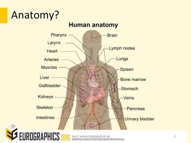 The Online Anatomical Human: Web-based Anatomy Education