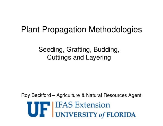 Plant Propagation Methodologies Seeding, Grafting, Budding, Cuttings and Layering Roy Beckford – Agriculture & Natural Res...