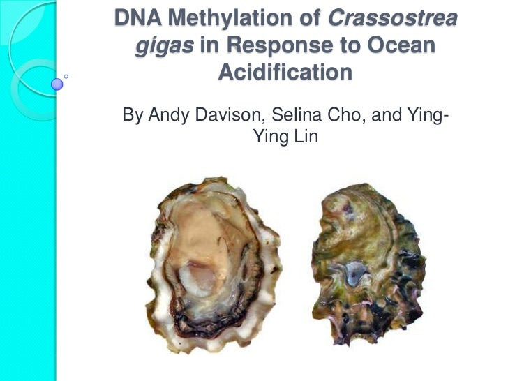 DNA Methylation of Crassostrea gigas in Response to Ocean         AcidificationBy Andy Davison, Selina Cho, and Ying-     ...