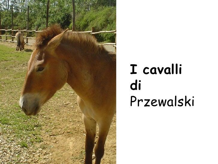 I cavalli di  Przewalski