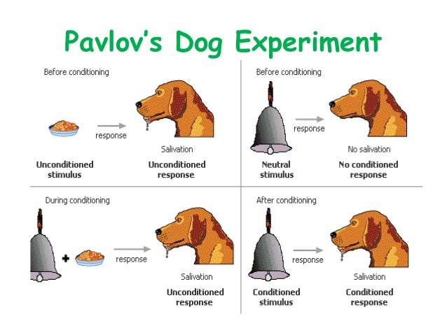 classic conditioning The classic classical conditioning experiment conducted by pavlov goes as follows: a dog is hooked to a mechanism that measures the amount that the dog salivates a tone is sounded just before a dog is given meat powder this occurs several times.