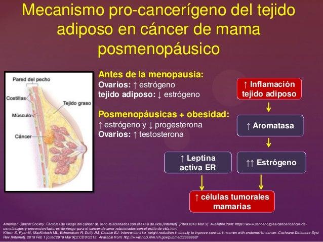 Mecanismo pro-cancerígeno del tejido adiposo en cáncer de mama posmenopáusico Antes de la menopausia: Ovarios: ↑ estrógeno...