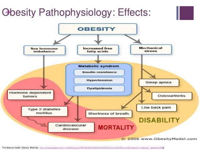 Obesity and Low Carbohydrate Diets