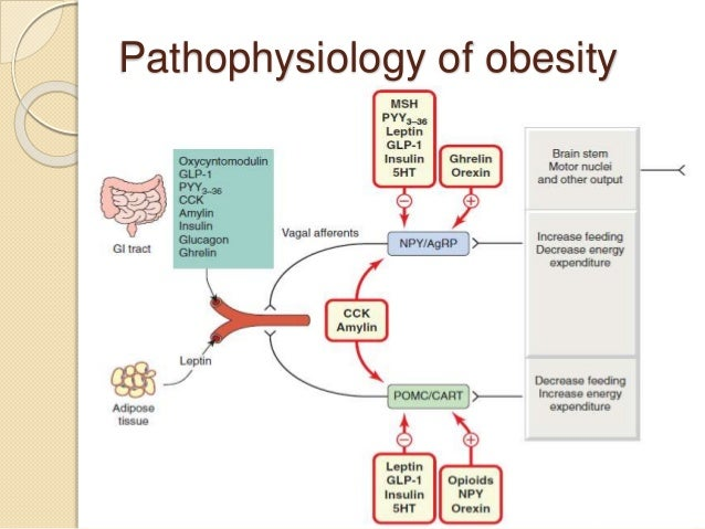 physiology neurons hormones and obesity Health and medicine / anatomy and physiology / anatomy and physiology quizzes 280 quizzes stress hormones & adaptation in the influences on obesity & weight.