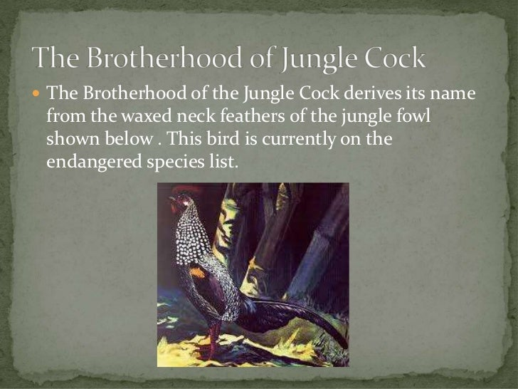  The Brotherhood of the Jungle Cock derives its name from the waxed neck feathers of the jungle fowl shown below . This b...
