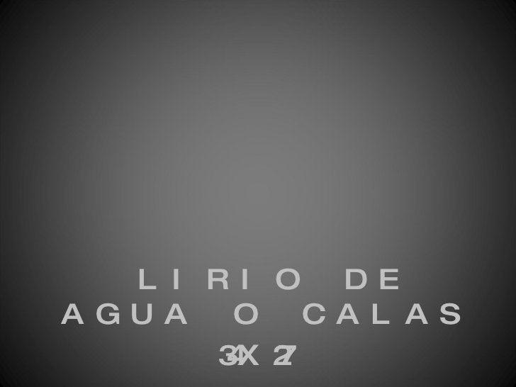 <ul><li>LIRIO DE AGUA O CALAS </li></ul><ul><li>34X27 </li></ul>