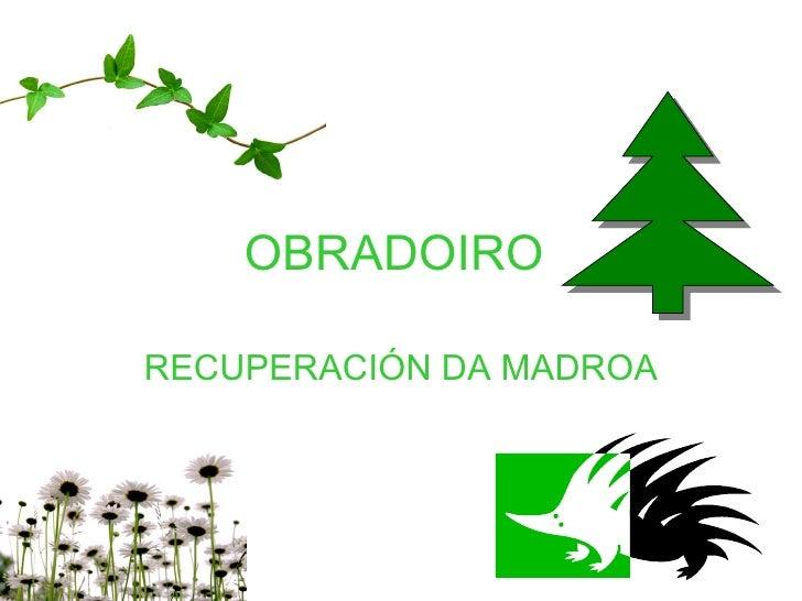 OBRADOIRO  RECUPERACIÓN DA MADROA