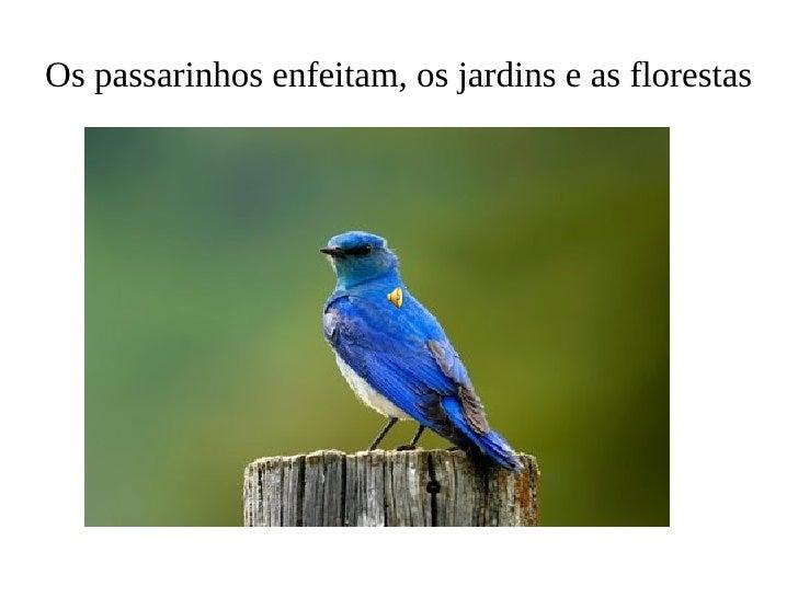 Os passarinhos enfeitam, os jardins e as florestas