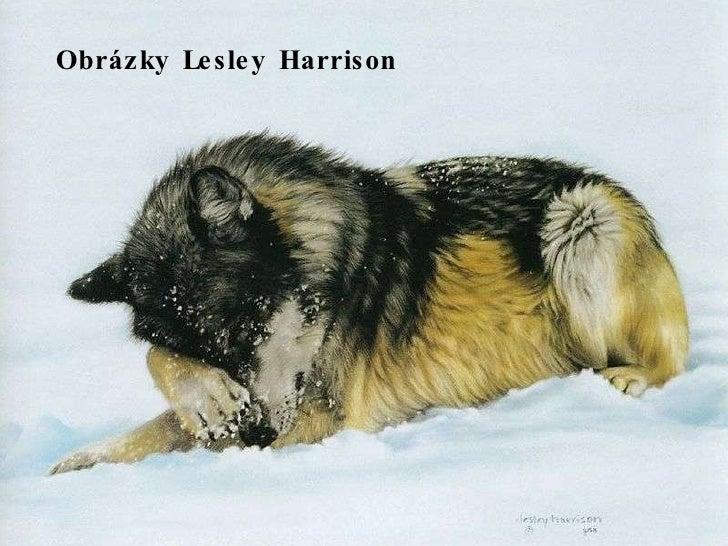 Obrázky Lesley Harrison