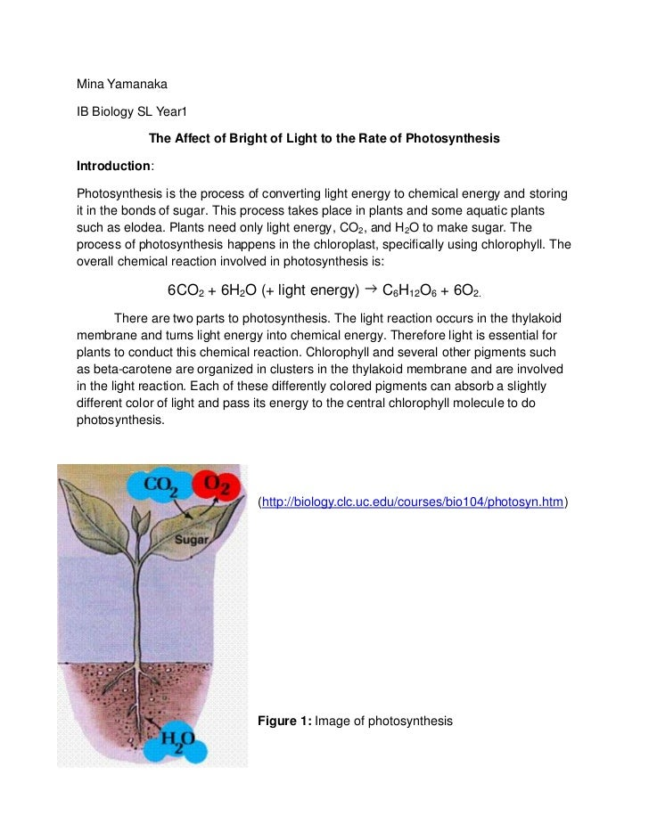 an experiment on the effects of light changes on photosynthesis Effect of light intensity on the rate of photosynthesis very high light intensities may slow the rate of photosynthesis due to bleaching of chlorophyll oxygen is a gaseous product, so can be measured by noting volume changes of the number of bubbles evolved (less accurate.