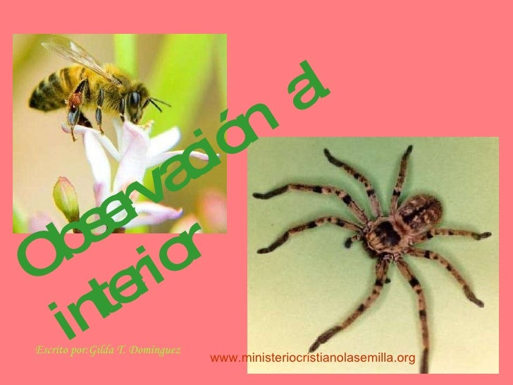 Observaci ón  al interior Escrito por:Gilda T. Domínguez www.ministeriocristianolasemilla.org