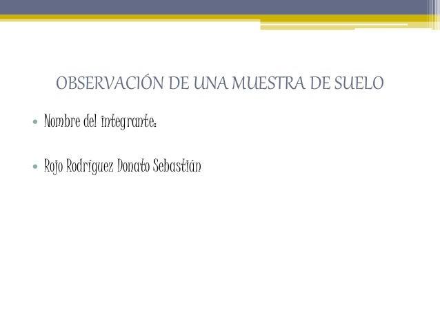 OBSERVACIÓN DE UNA MUESTRA DE SUELO • Nombre del integrante: • Rojo Rodríguez Donato Sebastián