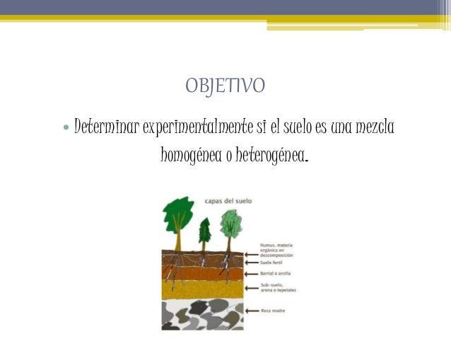 Observación de una muestra de suelo.pptxju  Slide 3