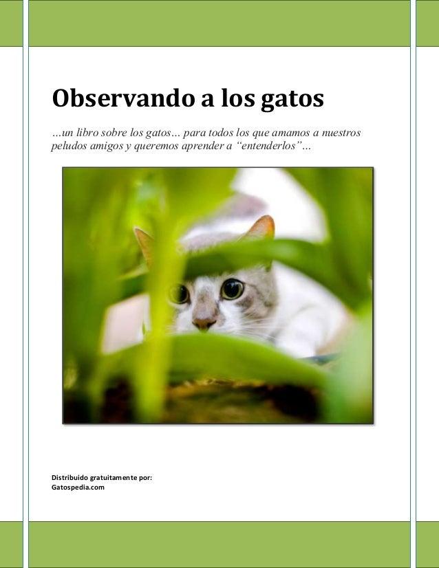 Observando a los gatos (Gatospedia.com)