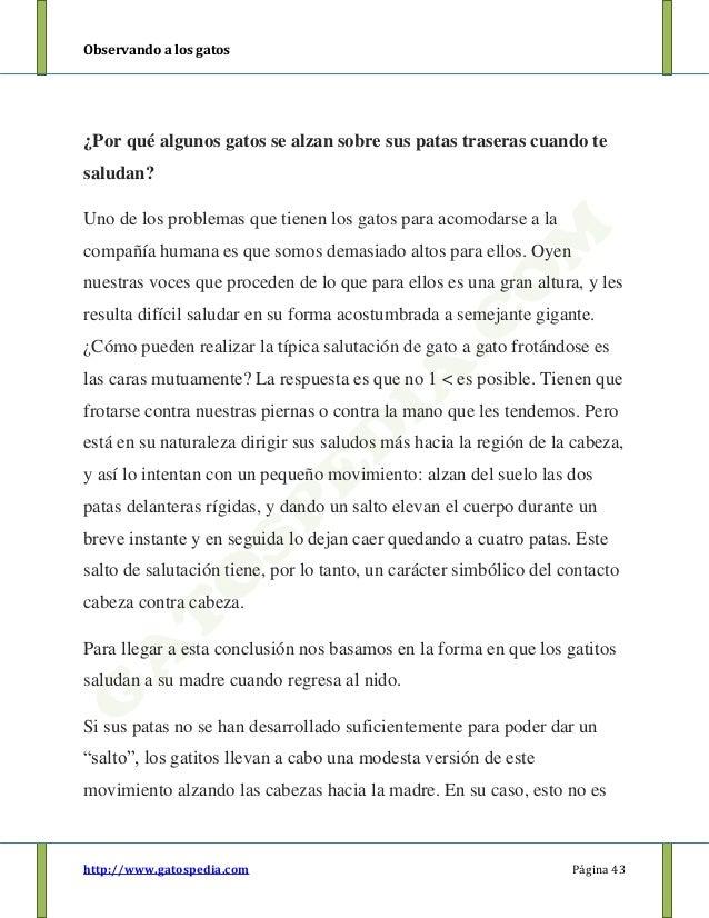 Bonito Gato Trasera Anatomía De La Pierna Embellecimiento - Imágenes ...