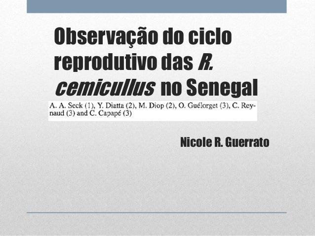 Observação do ciclo  reprodutivo das R.  cemicullus no Senegal  Nicole R. Guerrato