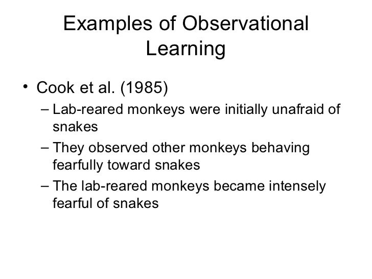 Observational learning / social learning powerpoint by danis marandis.