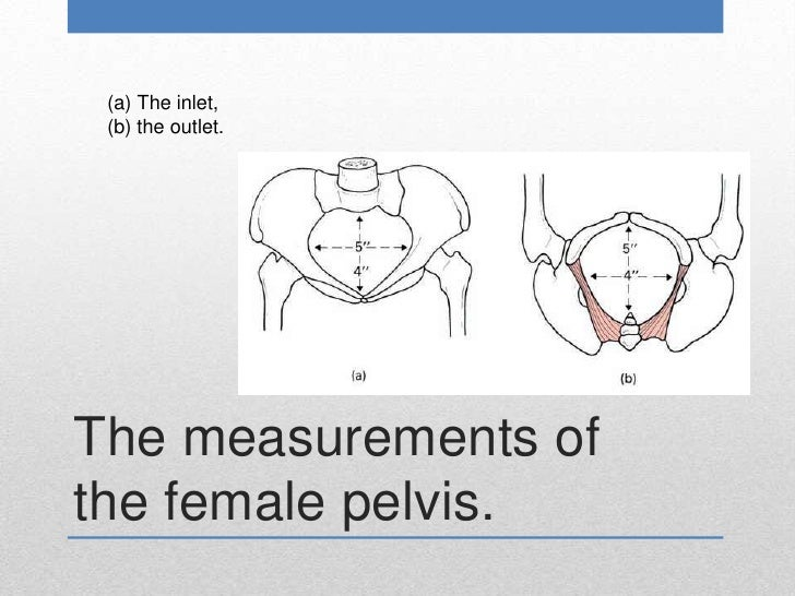 Obstetrical pelvic measurements